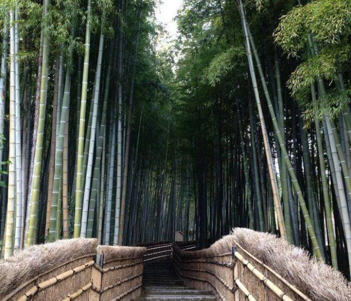 bridge bamboo